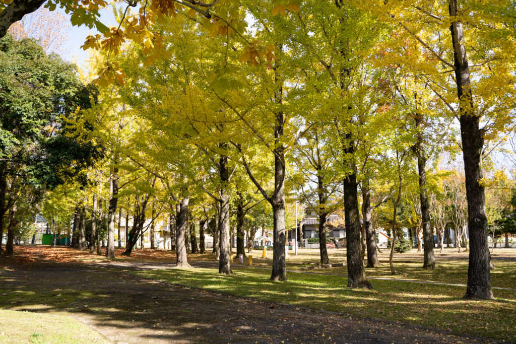 雄日ヶ丘公園 紅葉